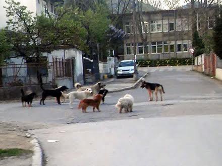 Psi ispred škole u Vranju: ima li leka? FOTO OK Radio