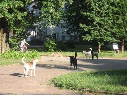 Psi lutalice, izvor troškova FOTO OK Radio