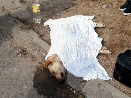 Napušteni psi bez ikakve zaštite FOTO: OK Radio