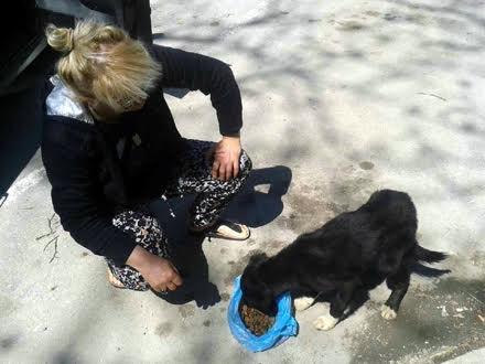 Spasilac i oslobođeni pas FOTO OK Radio/Privatna arhiva