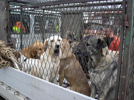 Predviđen humaniji tretman napuštenih životinja FOTO: Komrad Vranje