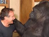 Gorilu Koko rasplakala vest o Vilijamsovoj smrti