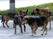 Učestalo trovanje pasa po Vranju