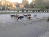 OPREZ: Čopori pasa haraju gradom!