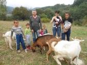 Stiglo stado koza za Stojiljkoviće