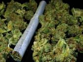 Al: Zaplenjeno 11 kg marihuane