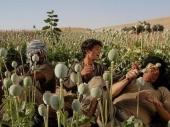 Rekordan uzgoj opijuma u Avganistanu