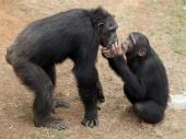 Majmuni i deca razmišljaju na sličan način