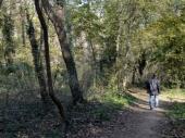 Silovanje u Banjičkoj šumi