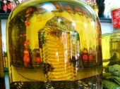 Krijumčario zmiju u flaši