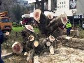 Posečeno omiljeno drvo Leskovčana