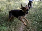Opasni psi na niškim ulicama