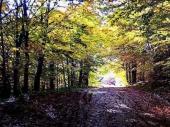 Pustošenje šuma oko Prohora Pčinjskog