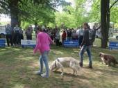 Uspeh vranjske izložbe pasa