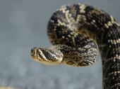 Najezda zmija u Nišu!