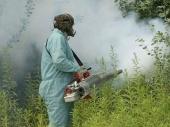 Zaprašivanje protiv komaraca ekološkim preparatom