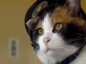 Japan oplakuje smrt Tame, jedine mačke