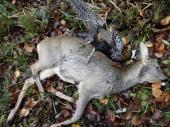 Kriminal u lovištima: Ubijanje iz zabave