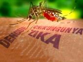 Zika se prenosi i seksom?