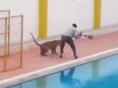 Leopard upao u školu, šestoro povređeno