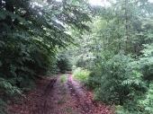 NA NIŠANU: Šumsko i lovci U KLINČU