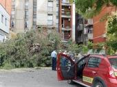 PALO DRVO u centru, oštećena DVA auta