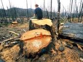Krađa šume: Zločin bez kazne