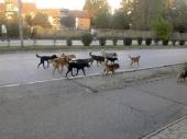 Psi lutalice u elektronskoj mreži