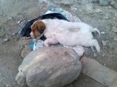 Ugušili štenca, PA GA DOTUKLI KAMENOM
