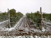 VRANJE: Voćnjaci i malinjaci pod snegom