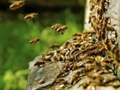 Vranje: MINISTAR otvara SAJAM pčelarstva