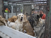 Korak po korak do AZILA za pse
