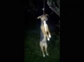 JEZIV PRIZOR: Pas obešen i ostavljen da visi