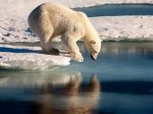 Istraživanje o polarnim medvedima iznenadilo čak i naučnike