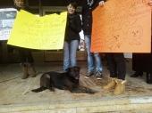 Drugi protest protiv AVENIJE MB